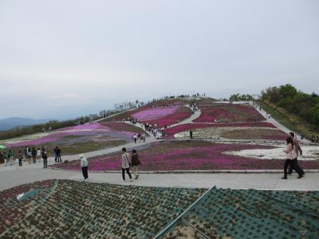 """茶臼山""""天空の花回廊""""芝桜を見て来ました♪_a0243064_1552241.jpg"""