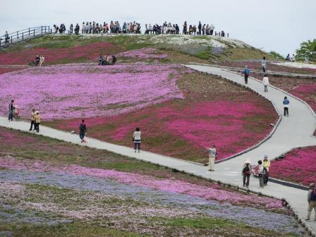 """茶臼山""""天空の花回廊""""芝桜を見て来ました♪_a0243064_15532797.jpg"""