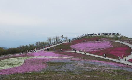 """茶臼山""""天空の花回廊""""芝桜を見て来ました♪_a0243064_15535254.jpg"""