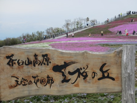 """茶臼山""""天空の花回廊""""芝桜を見て来ました♪_a0243064_1555257.jpg"""