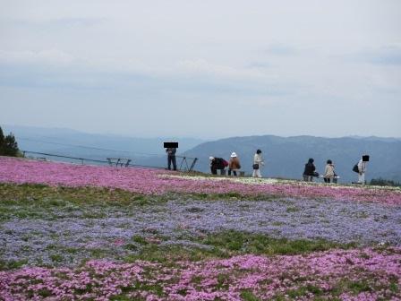 """茶臼山""""天空の花回廊""""芝桜を見て来ました♪_a0243064_164196.jpg"""