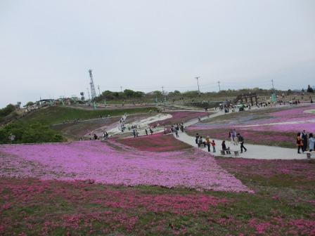 """茶臼山""""天空の花回廊""""芝桜を見て来ました♪_a0243064_16424.jpg"""