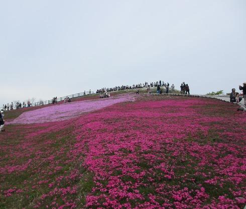 """茶臼山""""天空の花回廊""""芝桜を見て来ました♪_a0243064_1645375.jpg"""