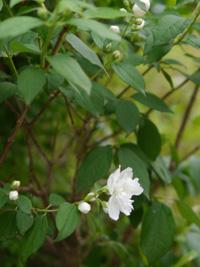 花の季節_b0142989_22121047.jpg