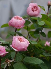 花の季節_b0142989_225591.jpg