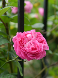 花の季節_b0142989_2272530.jpg