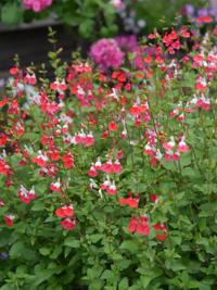 花の季節_b0142989_228978.jpg