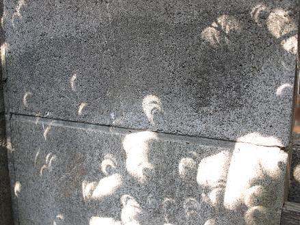 金環日食時の木漏れ日とバラ「友禅」_c0128489_21295238.jpg