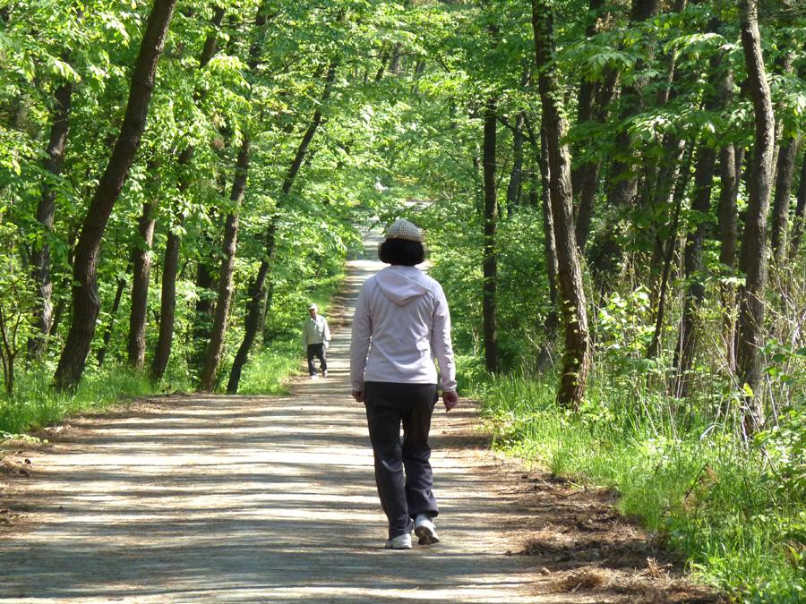 松原をウォーキング_f0150893_18472774.jpg