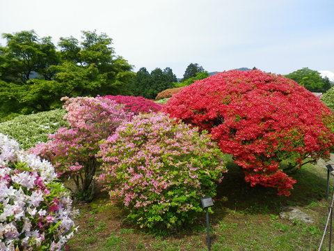 小田急 山のホテル_b0172896_17291948.jpg
