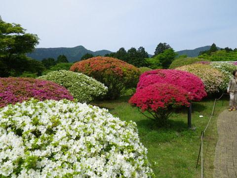 小田急 山のホテル_b0172896_17292336.jpg
