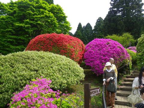 小田急 山のホテル_b0172896_17294159.jpg