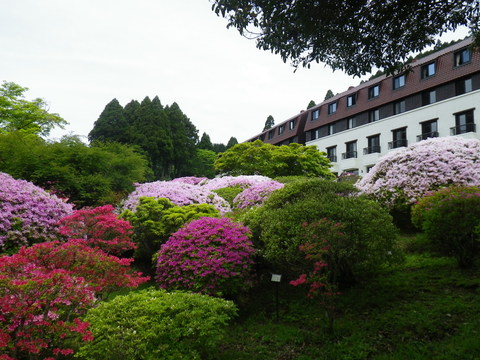小田急 山のホテル_b0172896_1738026.jpg