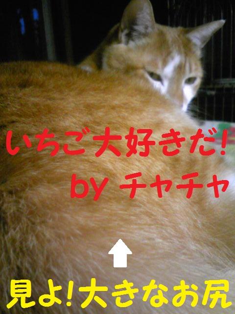 a0232197_20125339.jpg