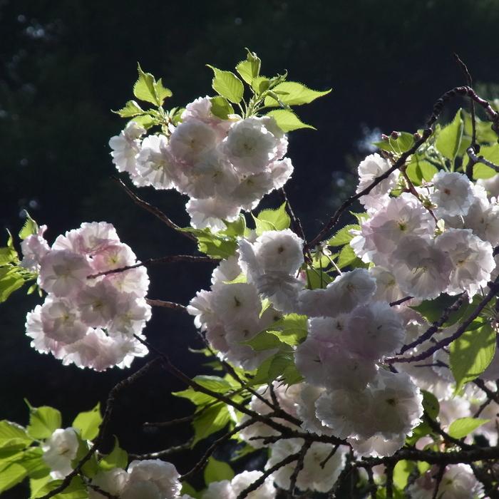 花 はな 犬 いぬ_c0049299_10194179.jpg