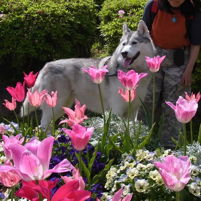 花 はな 犬 いぬ_c0049299_10201240.jpg