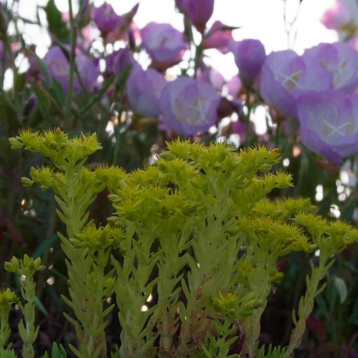 花 はな 犬 いぬ_c0049299_1021492.jpg