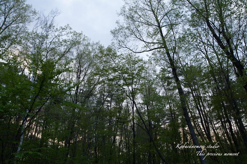 五月上旬新緑と山ツツジの頃やっと暖ったか_c0137403_18425219.jpg