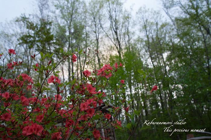五月上旬新緑と山ツツジの頃やっと暖ったか_c0137403_18434872.jpg