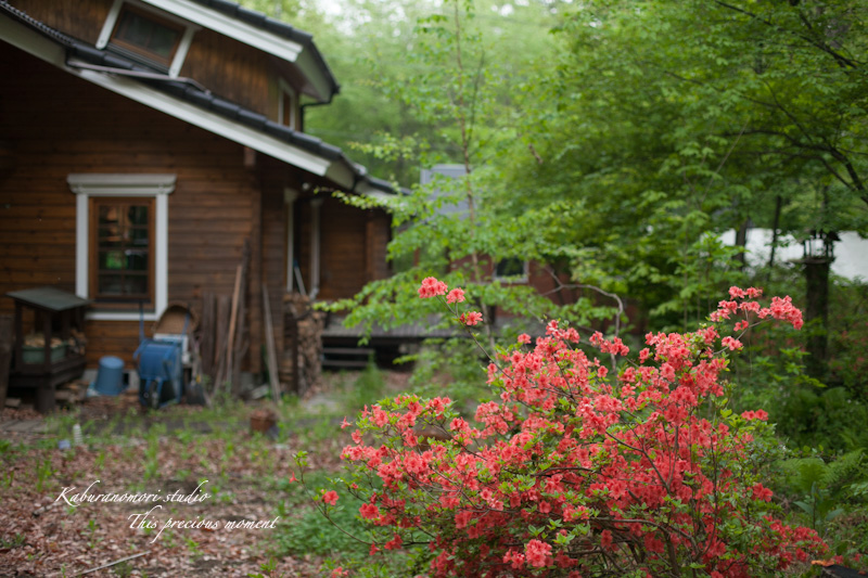 五月上旬新緑と山ツツジの頃やっと暖ったか_c0137403_18594366.jpg