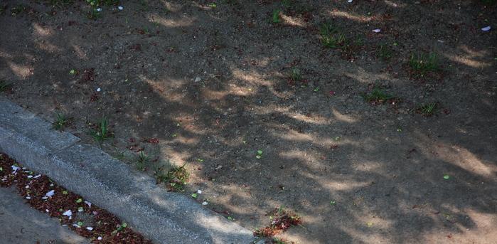 早朝の木漏れ日_f0033205_2127335.jpg