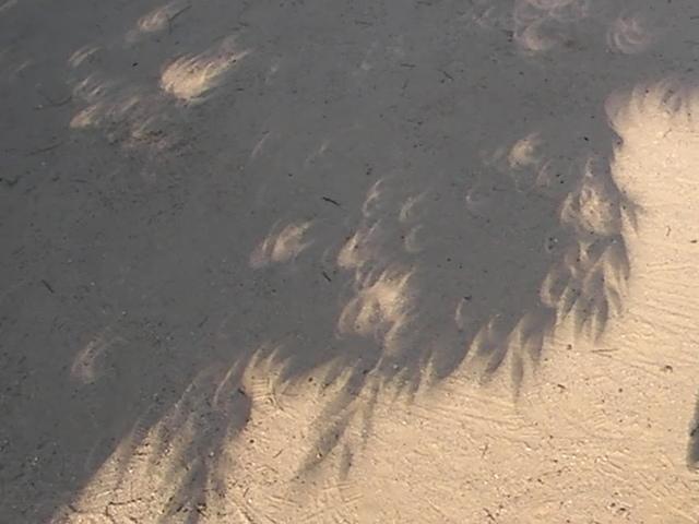 5/21(月)金環日食!_a0059812_8183141.jpg