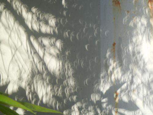 5/21(月)金環日食!_a0059812_884999.jpg