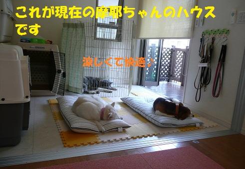 f0121712_15461372.jpg