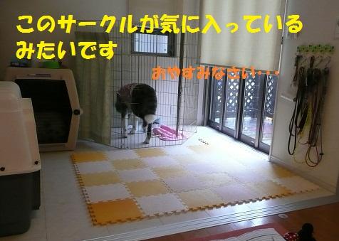 f0121712_15584745.jpg
