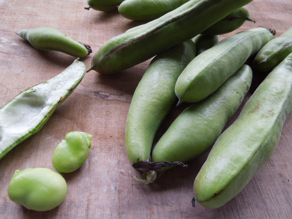 「空豆 収穫-2012」_a0120513_22185336.jpg