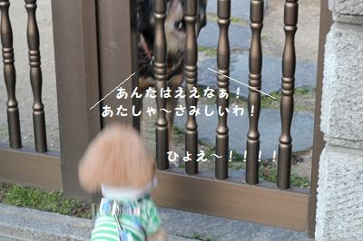 b0197418_20123290.jpg