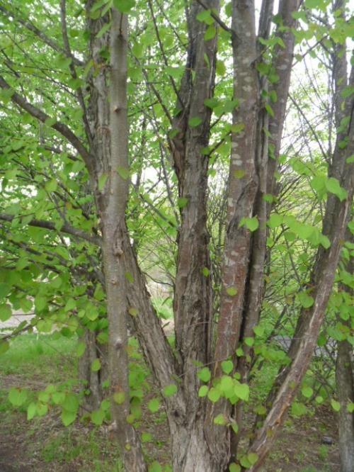 樹木の気持ち_b0174425_1619823.jpg