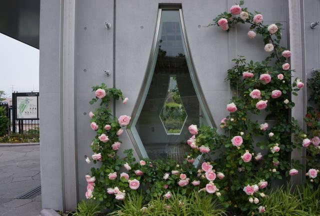 薔薇と洋館_a0257652_10445117.jpg