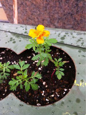 咲きました☆_b0161661_11323173.jpg