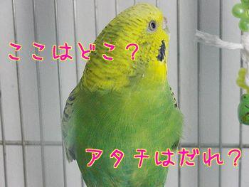 f0196665_20542070.jpg