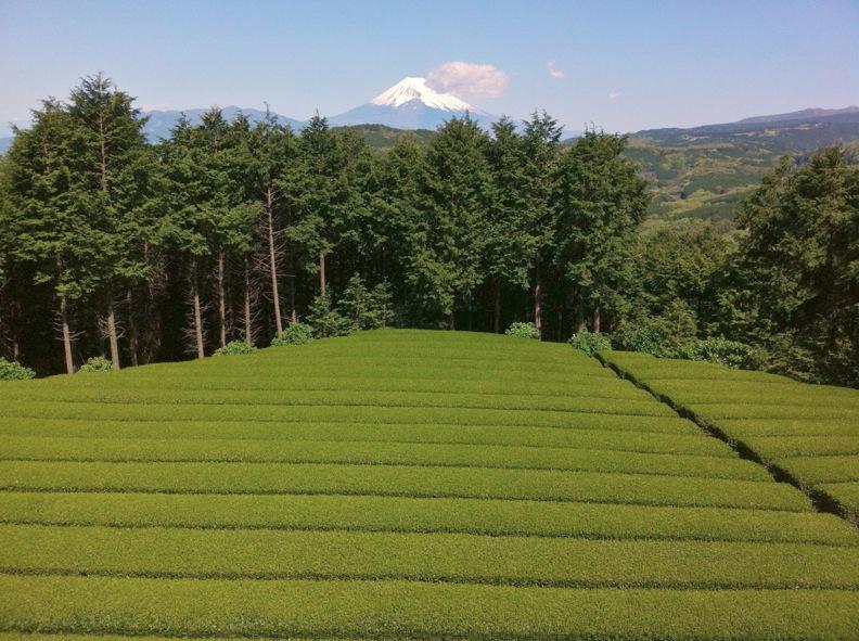 茶畑と富士_d0133581_10182627.jpg