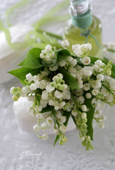 Lily of the valley_f0127281_16255595.jpg