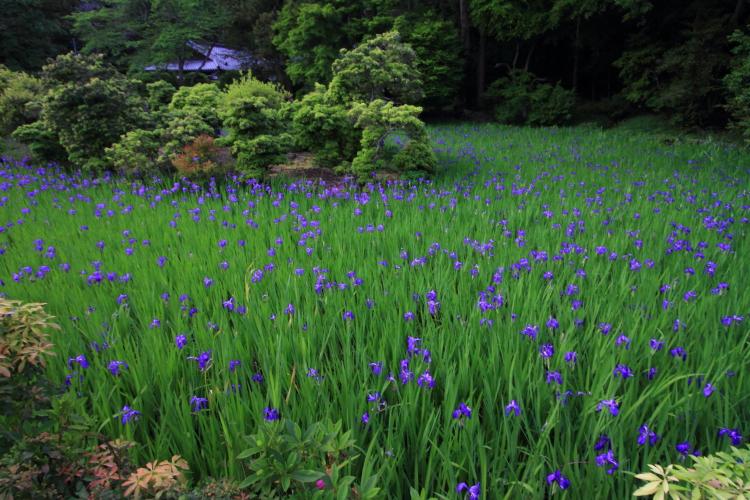 大田神社_e0051888_2041252.jpg
