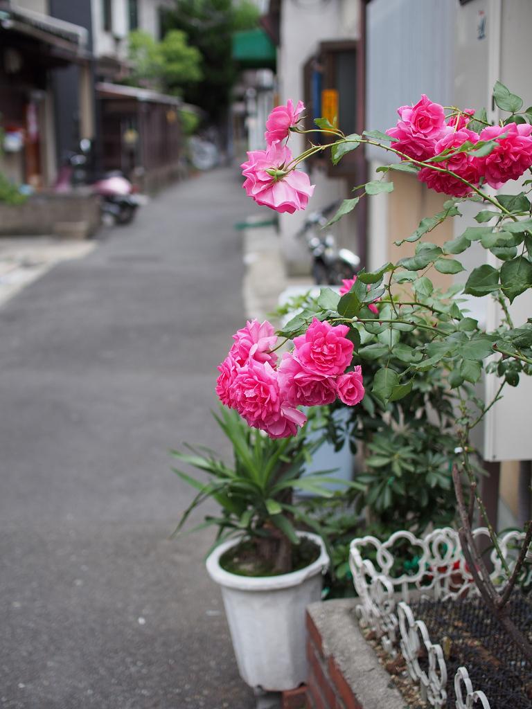 「中崎町スナップ♪」_a0133692_2058569.jpg