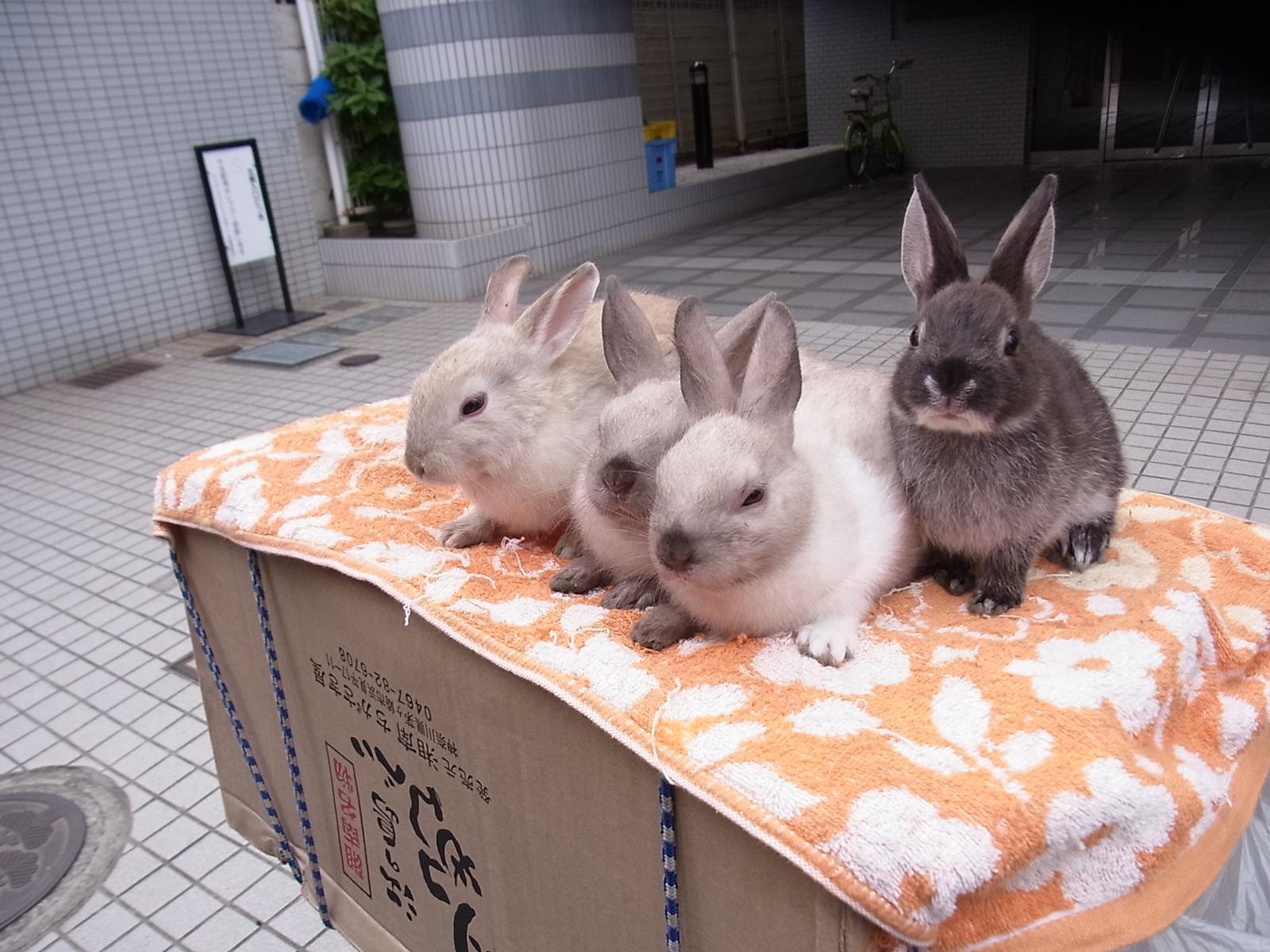 チーム鎌倉~part3すなわち最後~_b0176010_16355741.jpg