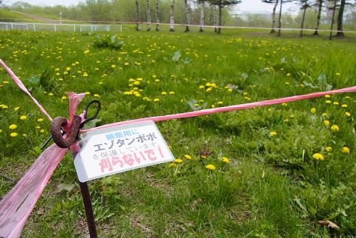 2012年5月23日(水):桜観察会 [中標津町郷土館]_e0062415_17305589.jpg