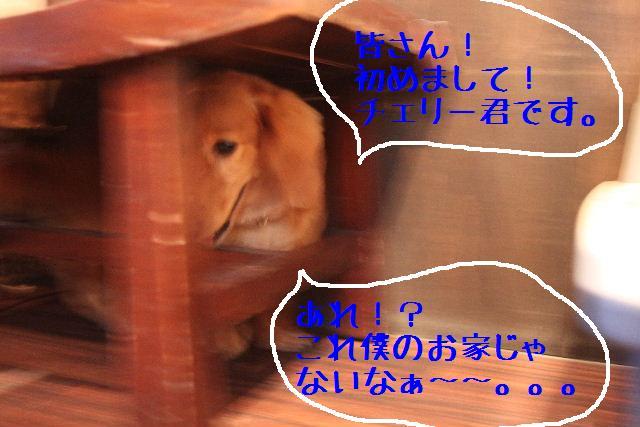 b0130018_16373856.jpg