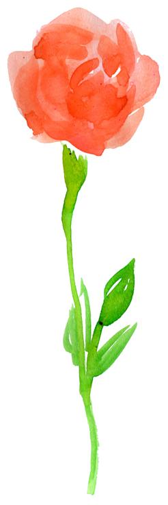 開花♪_f0135024_21135287.jpg