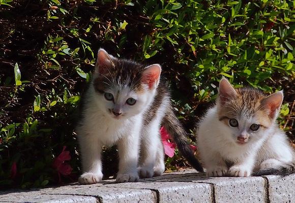 仔猫お披露目とアメリカフーロ_f0214527_21321527.jpg