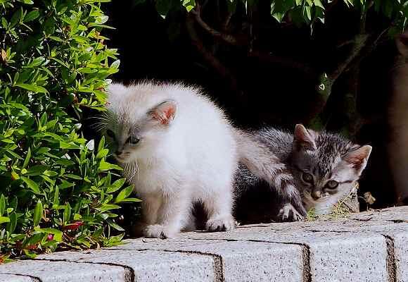 仔猫お披露目とアメリカフーロ_f0214527_21394223.jpg