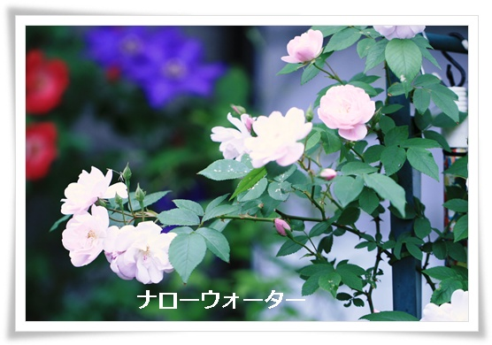 d0043737_9343736.jpg