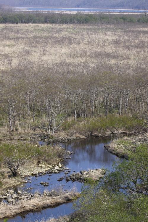 コッタロ湿原とこむら返りの夜 5月23日_f0113639_1538598.jpg