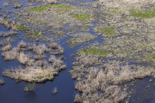 コッタロ湿原とこむら返りの夜 5月23日_f0113639_15411668.jpg