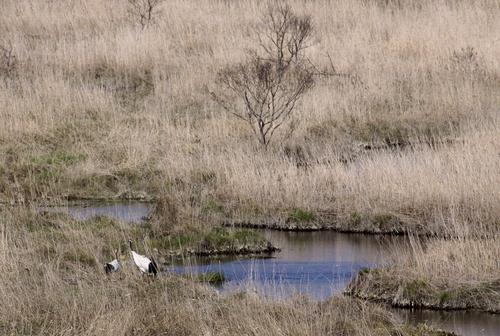 コッタロ湿原とこむら返りの夜 5月23日_f0113639_15421417.jpg