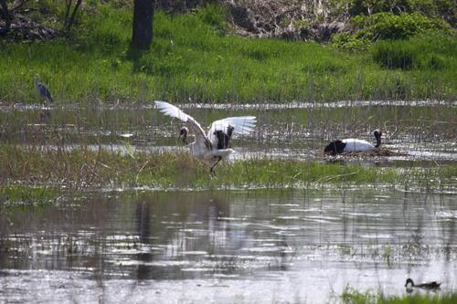 コッタロ湿原とこむら返りの夜 5月23日_f0113639_15432358.jpg